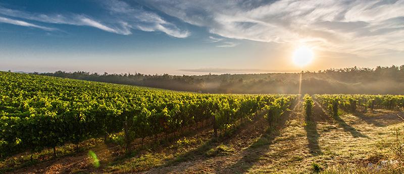 Wine & Agribusiness - EMA Legal Adelaide